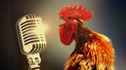 Rooster Mic